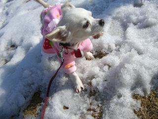 クルミさん、初めての雪かな?1