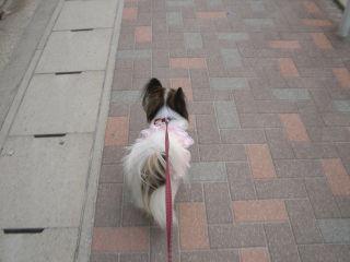 先頭をきって歩きますアリス