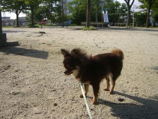 久しぶりの散歩3
