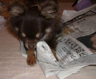 新聞と格闘中2