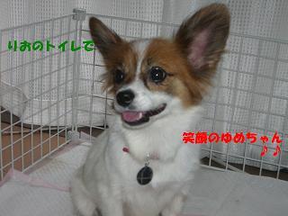 笑顔のゆめちゃん