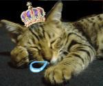 世界鼻提灯猫選手権初代チャンピオン