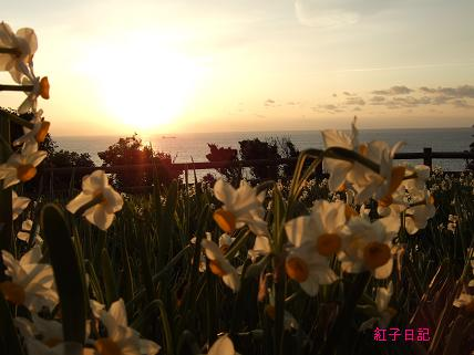 水仙と初日の出
