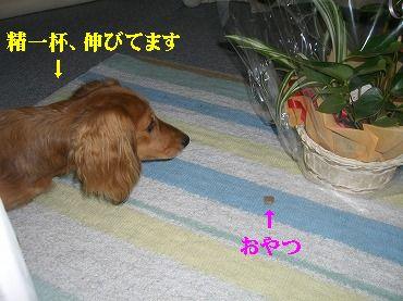 CIMG4663.jpg