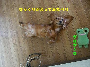 CIMG5419.jpg