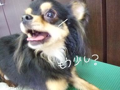 2008.07.29 ハリーくん③