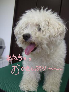 2008.07.31 ハッピーちゃん①
