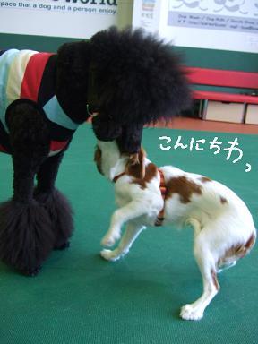 2008.08 バウワールド②