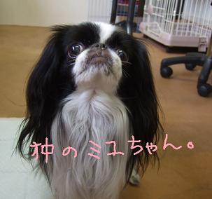 2008.07.01  ミユちゃん①