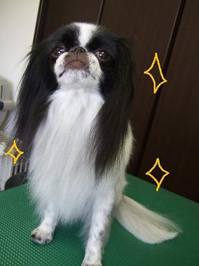 2008.07.01  ミユちゃん③