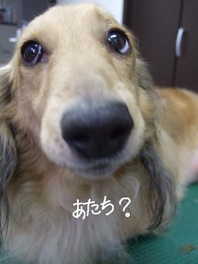 2008.08.03  なみへいくん&玉ちゃん④