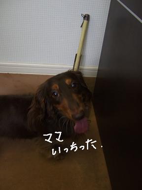 2008.09.20  ダックスオムリくん①