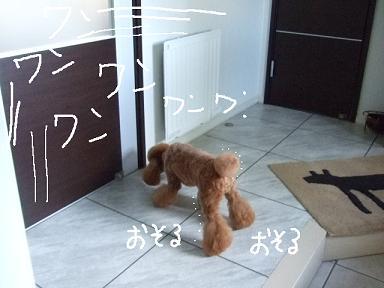 2008.09.20  プードルくるみちゃん③