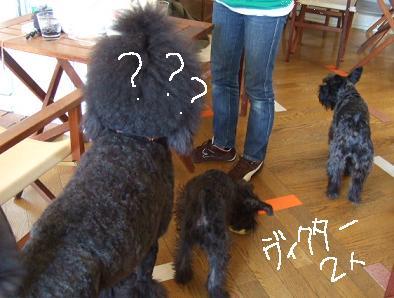 2008.09.23  ジャンカルロ登場!②