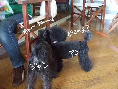 2008.09.23  ジャンカルロ登場!④