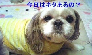 love_20070301_1