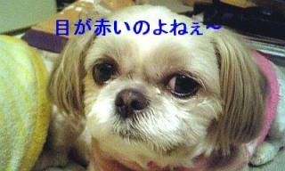 mint_20070301_2