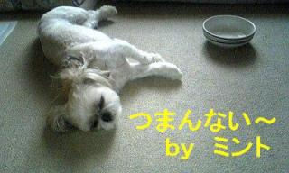 mint_20070813_1