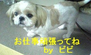 bibi_20070813_1