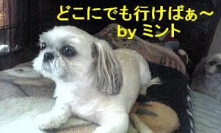 mint_20070815_1