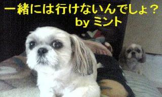 mint_20070815_2