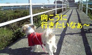 mint_20071103_1