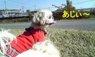 love_20071103_2
