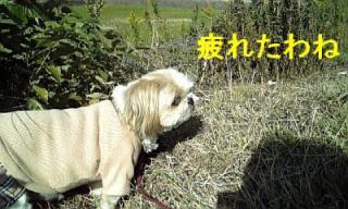 bibi_20071103_1