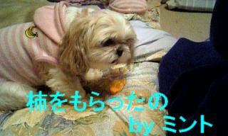 mint_20071121_1
