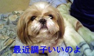 bibi_20071122_1