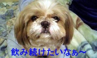 bibi_20071122_4