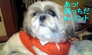 mint_20071127_1