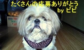 bibi_20071202_1