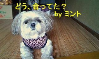 mint_20071202_2