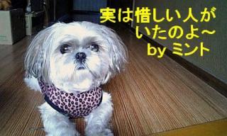 mint_20071203_1