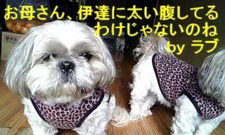 love_20071203_1
