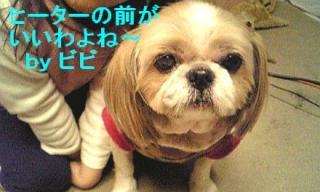 bibi_20071205_1