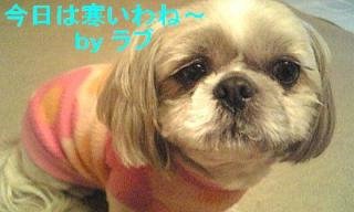 love_20071205_1