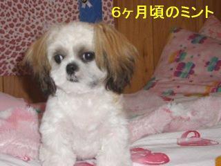 mint_20061206_2