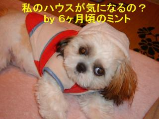 mint_20080211_3