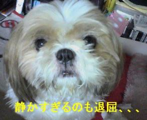 bibi_20060816_1