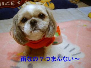 love_20061226_1