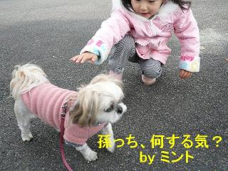mint_20071215_1