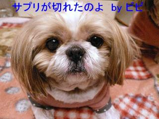 bibi_20071218_1