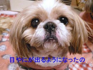 bibi_20071218_3