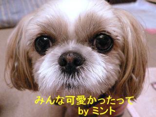 mint_20071218_1