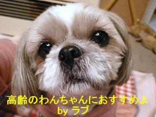 love_20071218_1