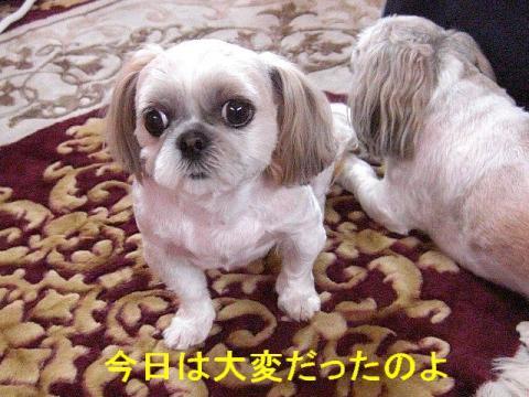mint_20080607_1
