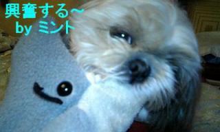 mint_20071127_4