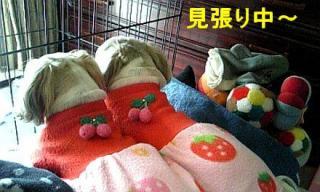 lovemint_20071209_2